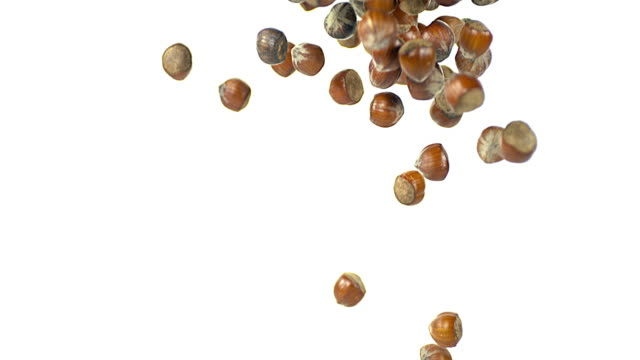 hazelnuts, corylus avellana, dry fruits falling against white background, slow motion 4k - hazelnut stock videos & royalty-free footage