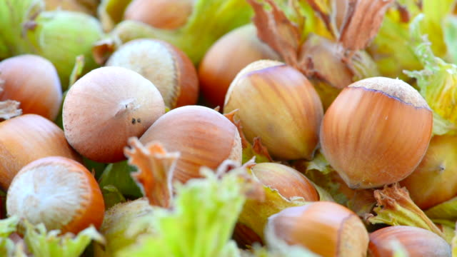 hazelnuts in shell and leaves - nutshell stock videos & royalty-free footage