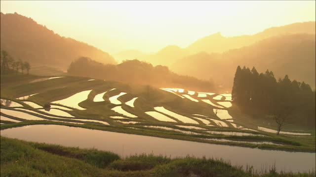 hazy golden sunlight illuminates rice paddies with silhouetted mountains in background - satoyama scenery stock videos & royalty-free footage