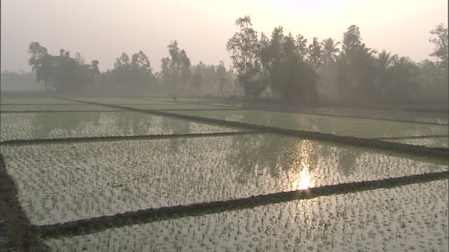 vídeos de stock, filmes e b-roll de ws pan hazy landscape of rice paddies / india - rice paddy