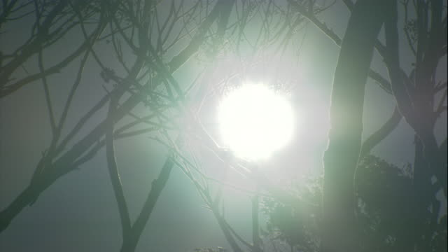 hazy smoke obscures the sun high above tree branches. - smog stock videos & royalty-free footage