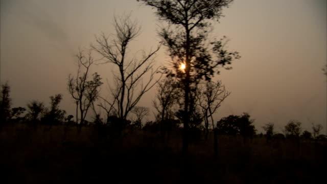 vídeos y material grabado en eventos de stock de a hazy sun glows above african bush land. available in hd - bush land