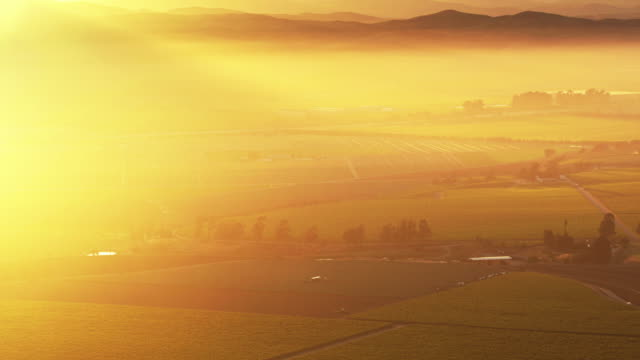 hazy sunrise in monterey county vineyards - aerial shot - vine plant stock videos & royalty-free footage