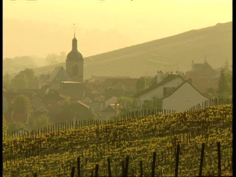 MS Hazy view across vineyard to village