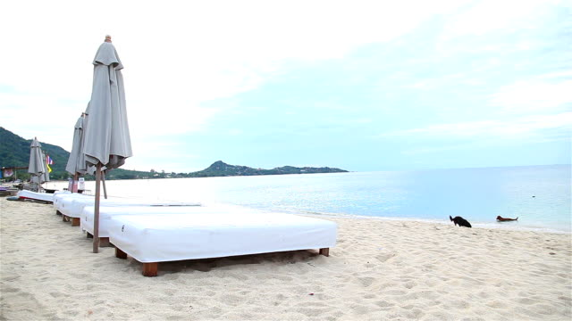 HD:Beds and parasols on the sandy beach.