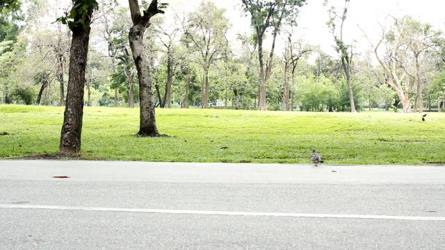 hd:birds crossing the road in the park. - road marking stock videos & royalty-free footage