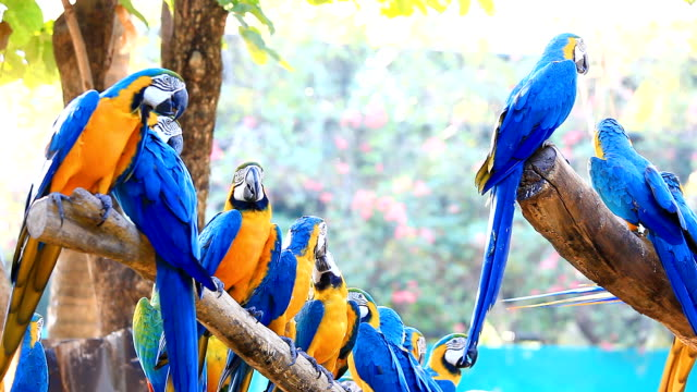 hd:blue macaws. - fine art portrait stock videos & royalty-free footage