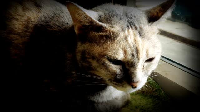 HD:Close Katze schlafen Stimmung.