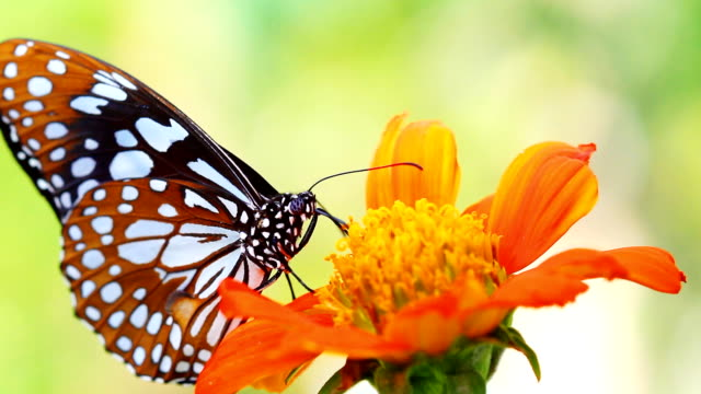 hd:closeup beautiful butterfly. - butterfly stock videos & royalty-free footage