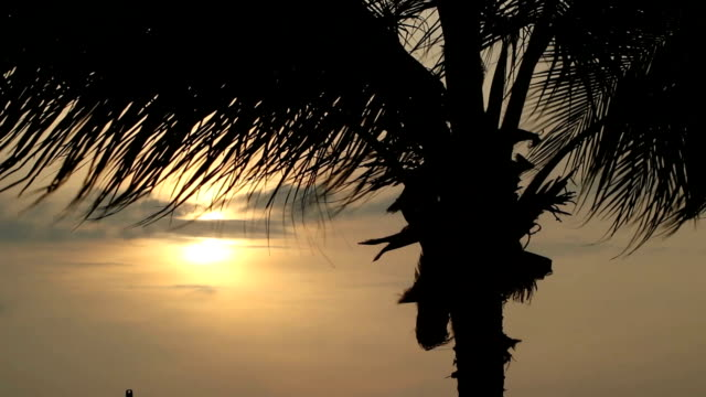 HD:Coconut trees by the sea