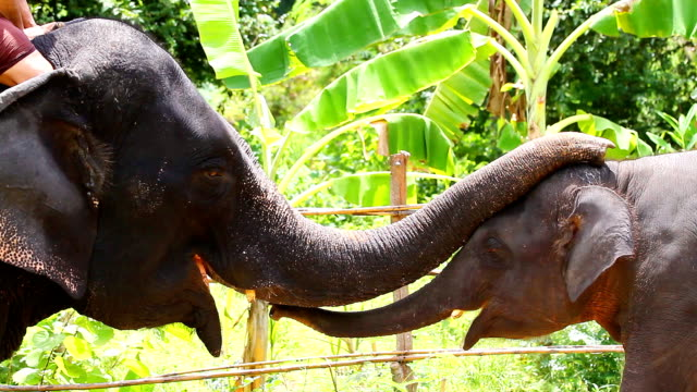 hd:elephant greeting with trunk. - young animal stock videos & royalty-free footage