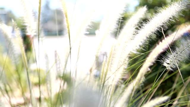 hd:flower of grass sprints. - formal garden stock videos & royalty-free footage