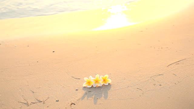 vídeos de stock e filmes b-roll de hd: flores na praia - aloha