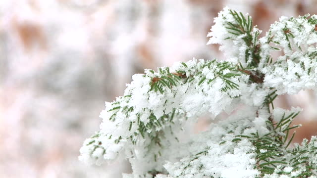 hd:frozen twigs - spruce tree stock videos & royalty-free footage