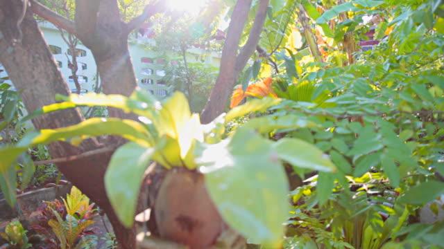 hd :ガーデンの家庭 - れんが造りの家点の映像素材/bロール