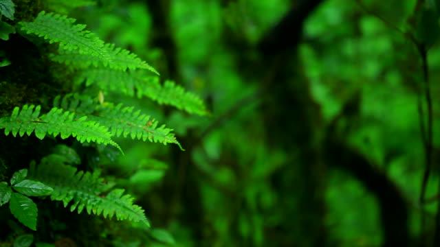 HD:Green fern in nature.(Panning shot)