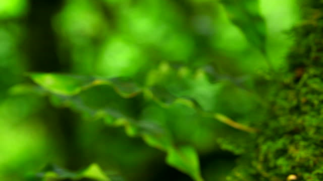 HD:Green moss.(Panning shot)