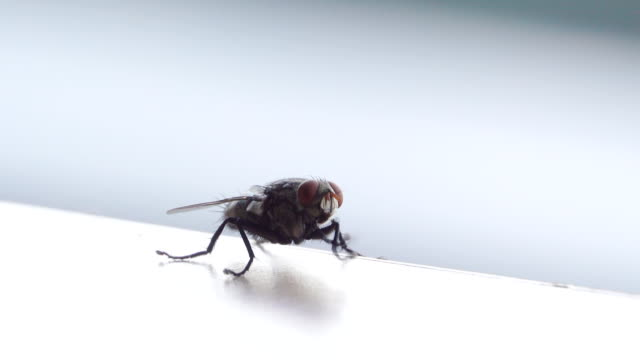 hd:insect fly - housefly stock videos & royalty-free footage
