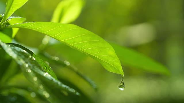 hd:morning natur bakgrund med vackra drop. - blöt bildbanksvideor och videomaterial från bakom kulisserna