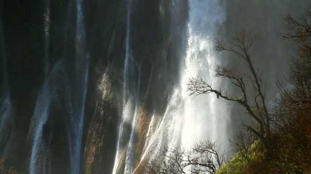 hd:morning sunlight with curtain of water as background. - tropical tree stock videos & royalty-free footage