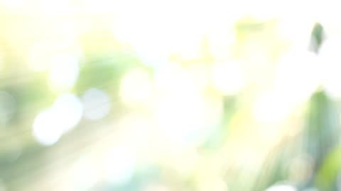 hd:natur grün bokeh sonnenlicht hintergründe. - überbelichtet stock-videos und b-roll-filmmaterial