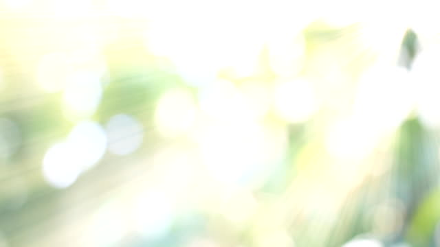 hd:nature green bokeh sunlight backgrounds. - sunlight stock videos & royalty-free footage