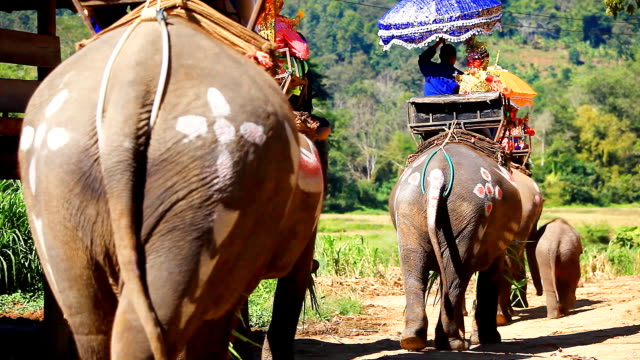 stockvideo's en b-roll-footage met hd:ordination by elephant.(thailand traditional culture) - redactioneel