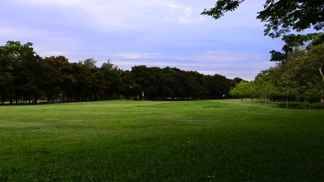 HD:Park and green lawn