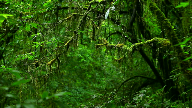 hd:rain forest.(panning shot) - dolly shot stock videos & royalty-free footage