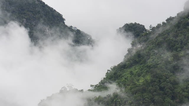 HD:Rainforest with mist on the green mountain