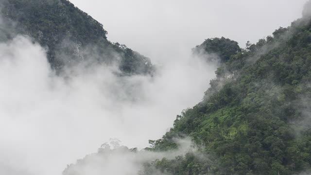 hd :熱帯雨林、ミストオンザグリーンマウンテン - かすみ点の映像素材/bロール