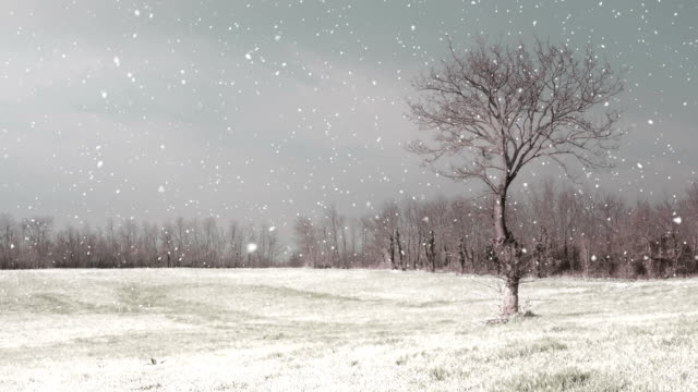 HD:Snowy Winter Landscape