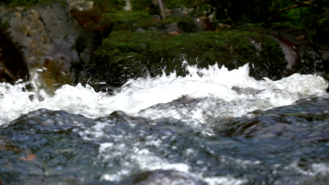 hd:stream in tollymore park,northern ireland - falling water stock videos & royalty-free footage