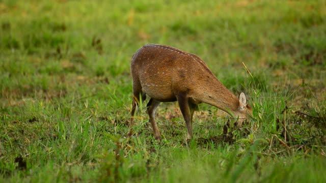 HD:Wildlife Sanctuary with Goitered Gazelle