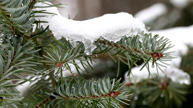 HD:Winter Background