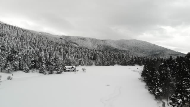 vídeos de stock e filmes b-roll de hd:winter landscape - abeto