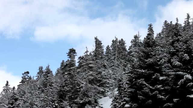 vídeos de stock e filmes b-roll de paisagem de inverno de hd: - pinaceae