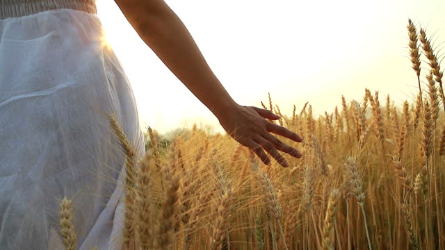 vídeos de stock e filmes b-roll de hd:woman in summer sunset at wheat field. - campo