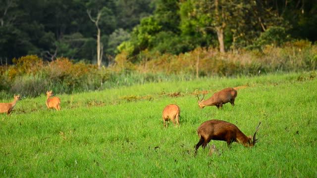 vídeos de stock, filmes e b-roll de hd: jovens renas na natureza - corça