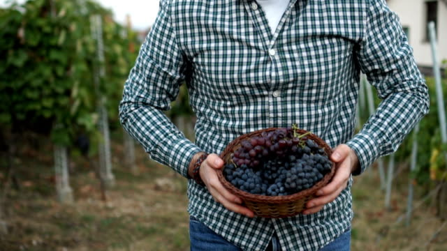 he carries a basket full of grapes - basket stock videos & royalty-free footage