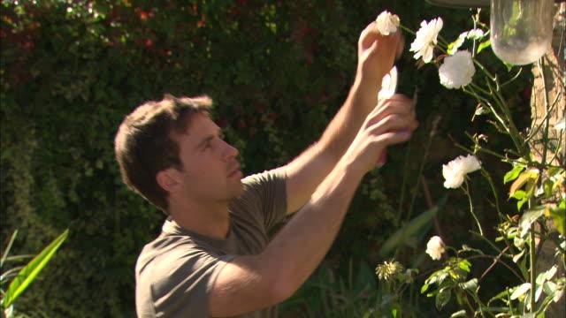 ms he cuts roses - solo un uomo di età media video stock e b–roll