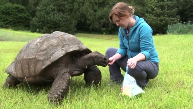 He is a tourist attraction worth travelling a long way to see Jonathan the giant tortoise is perhaps the world's oldest land animal living in...