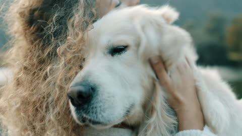 vídeos y material grabado en eventos de stock de ¡él es mi mejor amigo! - mascota