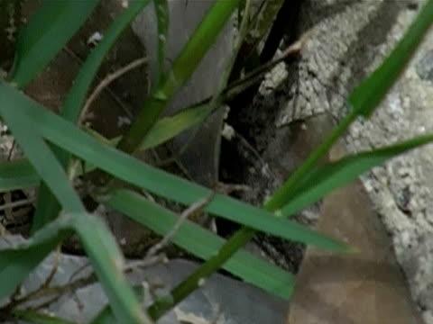 vídeos y material grabado en eventos de stock de de una serpiente - serpiente víbora