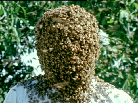 Head of Bee Biologist Entomologist Dr Norman Gary standing outside holding straw in mouth covered w/ bees gently shaking bodu up down then shaking...