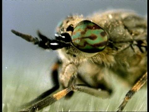 bcu head of fly as it grooms, uk - sehvermögen stock-videos und b-roll-filmmaterial