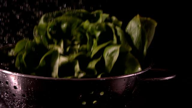 Head of Salat fallen in colander