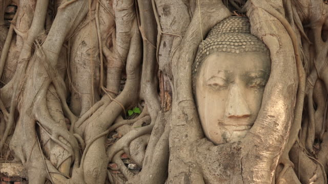 stockvideo's en b-roll-footage met head of sandstone buddha in banyan tree roots at wat mahathat in ayutthaya, thailand - kunst