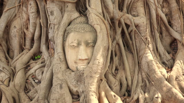 head of sandstone buddha in tree roots at wat mahathat in ayutthaya, thailand - sandstone stock videos & royalty-free footage