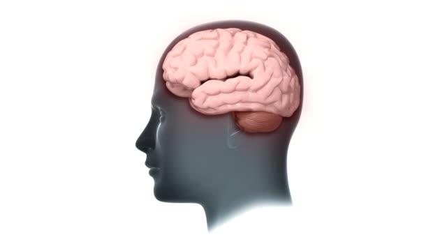Kopf Gehirn mit pulsierenden